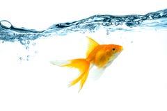 Respingo da água e bolhas da água Imagens de Stock