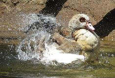 Respingo de Splish! Imagem de Stock Royalty Free