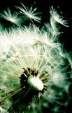 Respiração. Imagem de Stock
