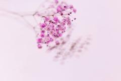 Respiração cor-de-rosa do ` s do bebê Foto de Stock Royalty Free