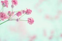 A respiração do bebê cor-de-rosa floresce o close up fotografia de stock