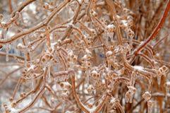 Respiração do gelo Imagens de Stock