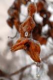 Respiração do gelo Fotografia de Stock Royalty Free