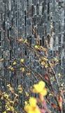 Respiración de la primavera Fotos de archivo libres de regalías