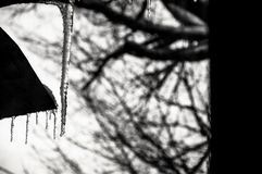 Respiración helada de enero Fotografía de archivo libre de regalías