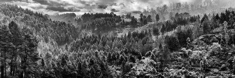 Respiración que toma árboles Fotos de archivo