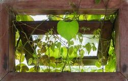 Respiraderos de la ventana con las hojas en forma de corazón de la isla Foto de archivo libre de regalías
