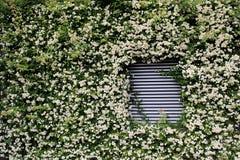 Respiradouro de ar coberto por flores e por plantas imagens de stock royalty free