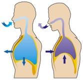 Respiration illustration stock