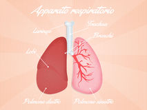 Respiratory system diagram Royalty Free Stock Photo