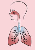 Respiratory system. Human silhouette with schematic Stock Image