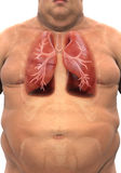 Respiratory System of Overweight Body Royalty Free Stock Images