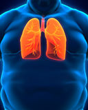 Respiratory System of Overweight Body Stock Images