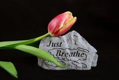 Respirez au printemps image libre de droits