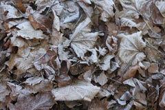 Respiro dell'inverno Fotografia Stock