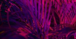 Resplandor borroso tropical del bosque de la hoja en el fondo ligero negro Alto contraste foto de archivo libre de regalías