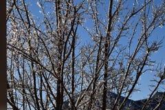 Resplandor cubierto carámbanos del árbol como bombillas Fotografía de archivo