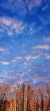Resplandor de la salida del sol en bosque de Alaska del invierno y cielo azul Foto de archivo libre de regalías
