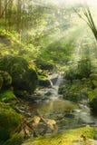 Resplandor de la sol a través del bosque Fotos de archivo libres de regalías