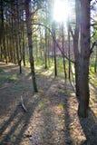 Resplandor en el bosque Imagenes de archivo
