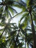 Resplandor entre los árboles Fotos de archivo