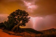 Resplandor milenario. Un resplandor en el árbol milenario, situado en la localidad de navarra royalty free stock image
