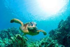Resplandor solar de la tortuga de mar fotos de archivo libres de regalías