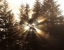 Resplandor solar a través de árboles Fotos de archivo