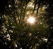 Resplandor solar a través de los árboles foto de archivo