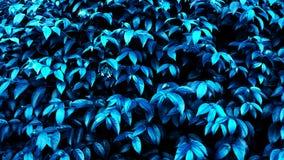 Resplandor tropical borroso del bosque de la hoja en el fondo oscuro Alto contraste foto de archivo libre de regalías