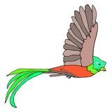Resplendent Quetzal stock illustration