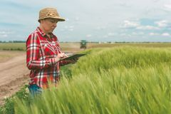 Responsible smart farming, using modern technology in agricultur. Al activity, female farmer agronomist with digital tablet computer using mobile app in wheat Royalty Free Stock Photo