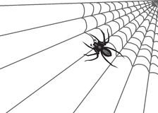 Spider Web. An illustration of Spider on the web Stock Photo