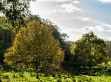 Respryn bosopheldering in het lage zonlicht Stock Foto's