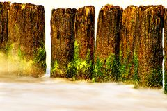 Ressac de la mer baltique avec des aines Photo libre de droits