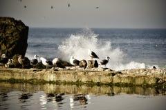 Ressaca e gaivotas Foto de Stock