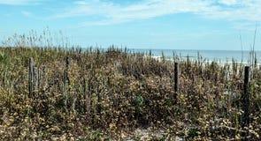 Ressemble au pré à côté de la plage Images libres de droits
