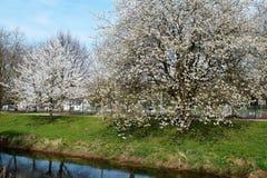 Ressort à la rivière Niers Photo stock