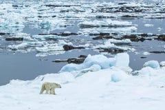 Ressort arctique dans le Spitzberg du sud Look polaire Image libre de droits