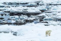 Ressort arctique dans le Spitzberg du sud Look polaire Photo stock