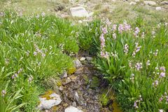 Ressort avec des fleurs image libre de droits