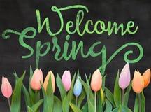 Ressort bienvenu avec des tulipes Images libres de droits