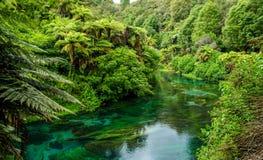 Ressort bleu qui est placé chez Te Waihou Walkway, Hamilton New Zealand Photo libre de droits