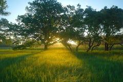 Ressort brumeux de pré au lever de soleil Images stock