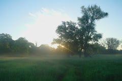 Ressort brumeux de pré au lever de soleil Photo stock