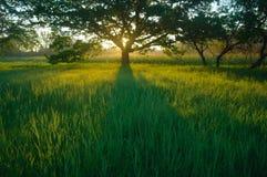 Ressort brumeux de pré au lever de soleil Photo libre de droits