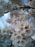 Ressort d'amour de fleur @ Images stock