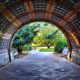 Ressort d'arbres de parc de perspective de tunnel photographie stock libre de droits