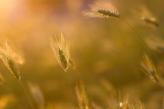 Ressort d'herbe ou backgound abstrait d'été images stock