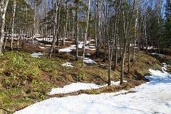 Ressort dans la forêt Photo stock